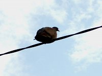 bird on the wire ptak na drucie