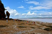 hopewell rocks on the bay of